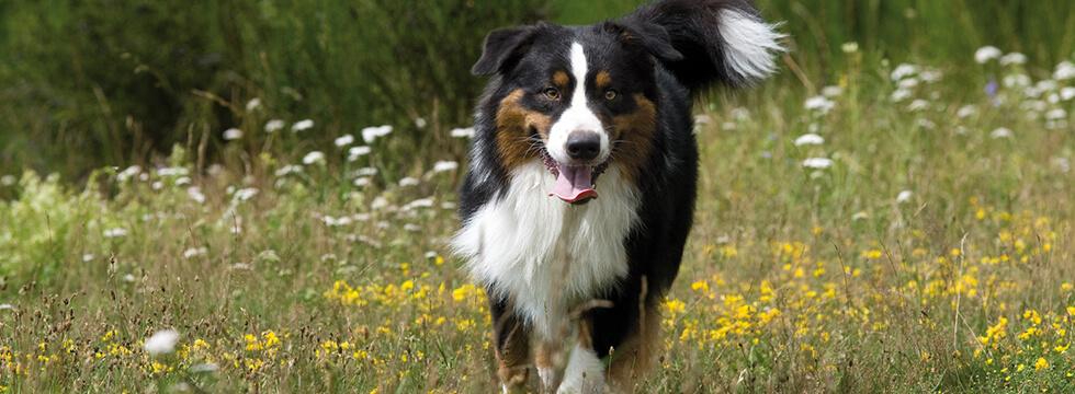 seniorhund05